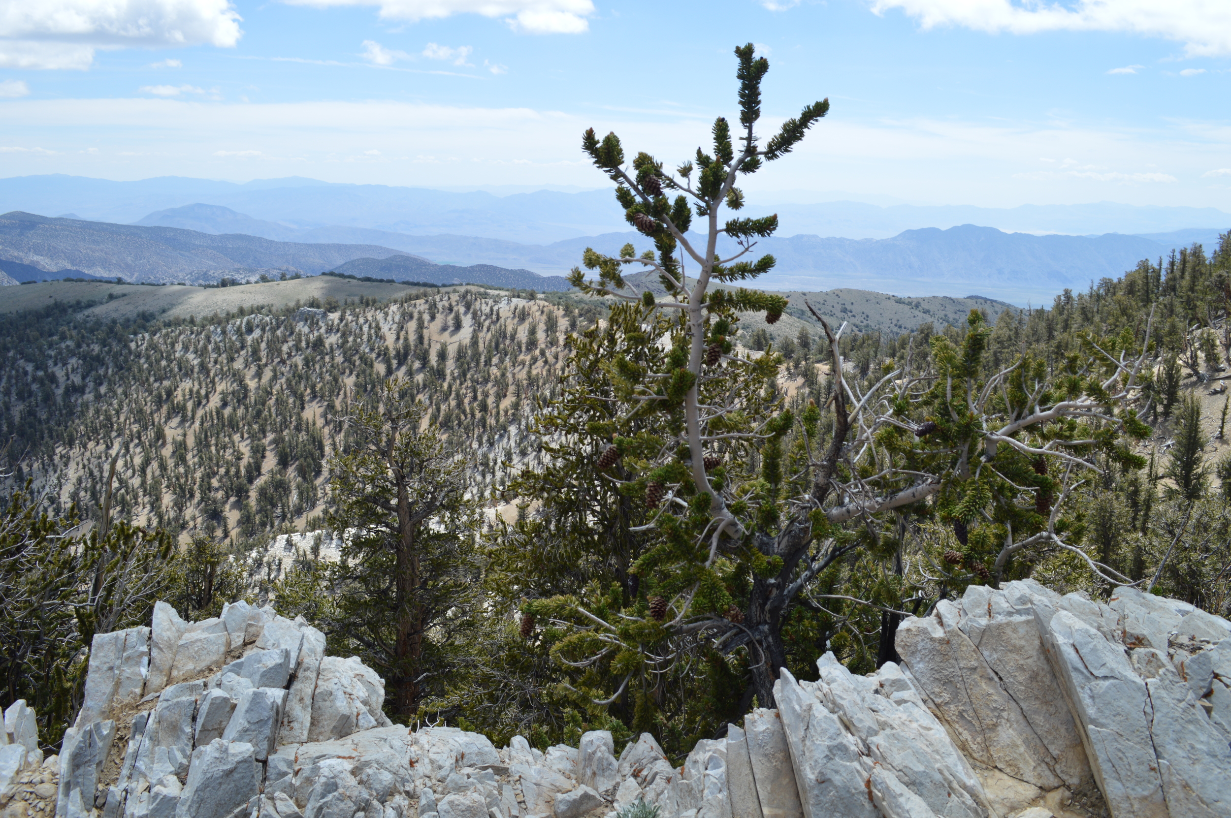 Methuselah Trail