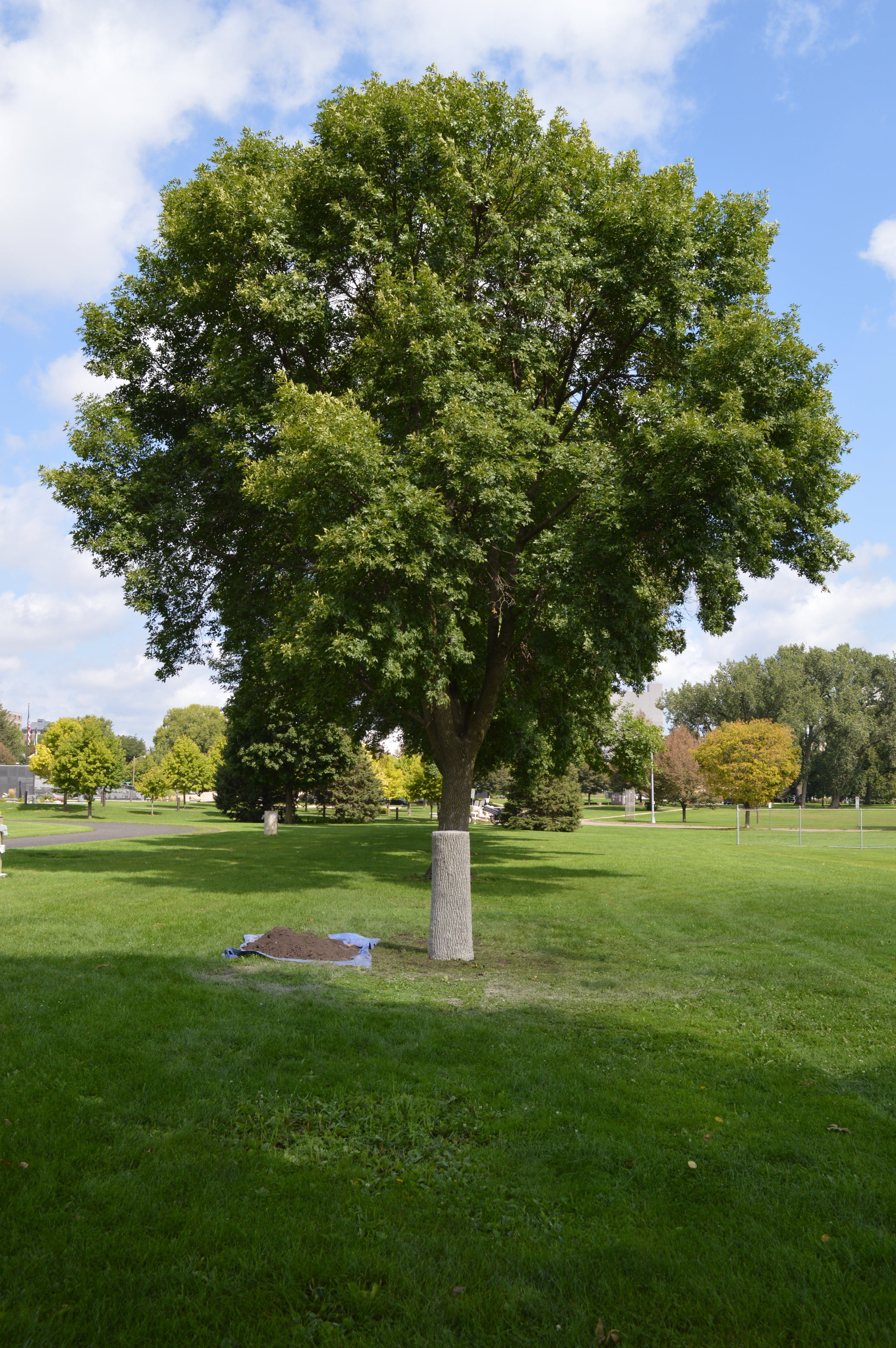 Stop EAB. Sculpture in Rochester, MN at Soldier's Field Memorial Park