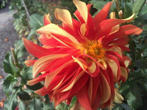 Lots of gorgeous autumn flowers