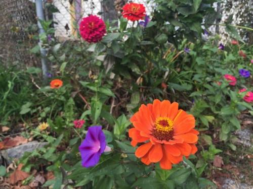 Flowers, flowers everywhere.