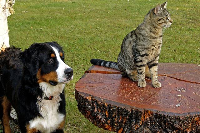 Las mascotas enemigas.