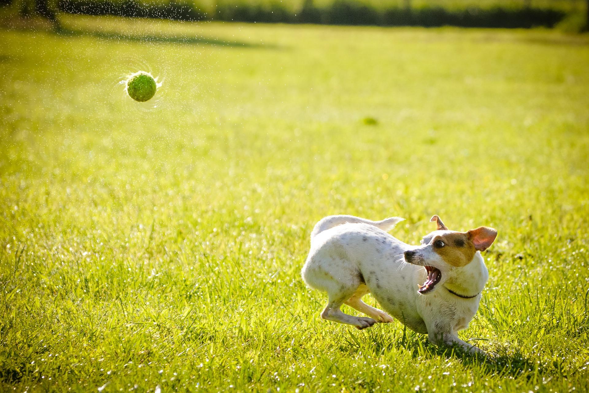 Si yo fuera perro, jugaría afuera todo el día.