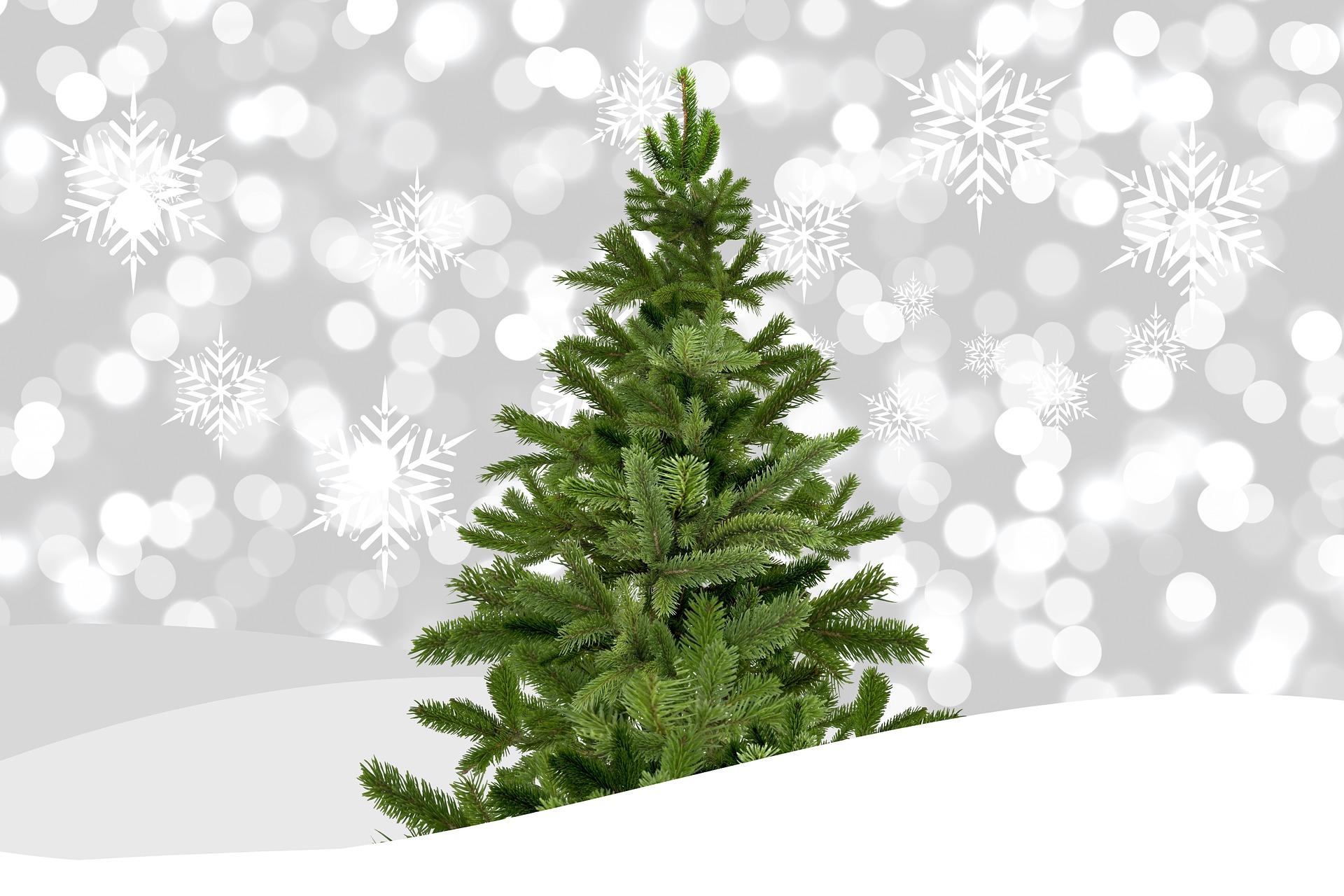 ¿Cómo es el árbol de Navidad perfecto para ti?