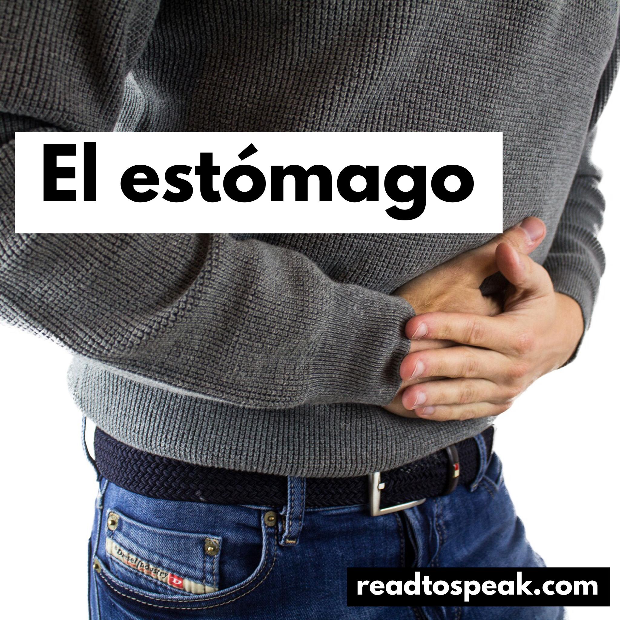 Read to Speak Spanish - el estómago.PNG
