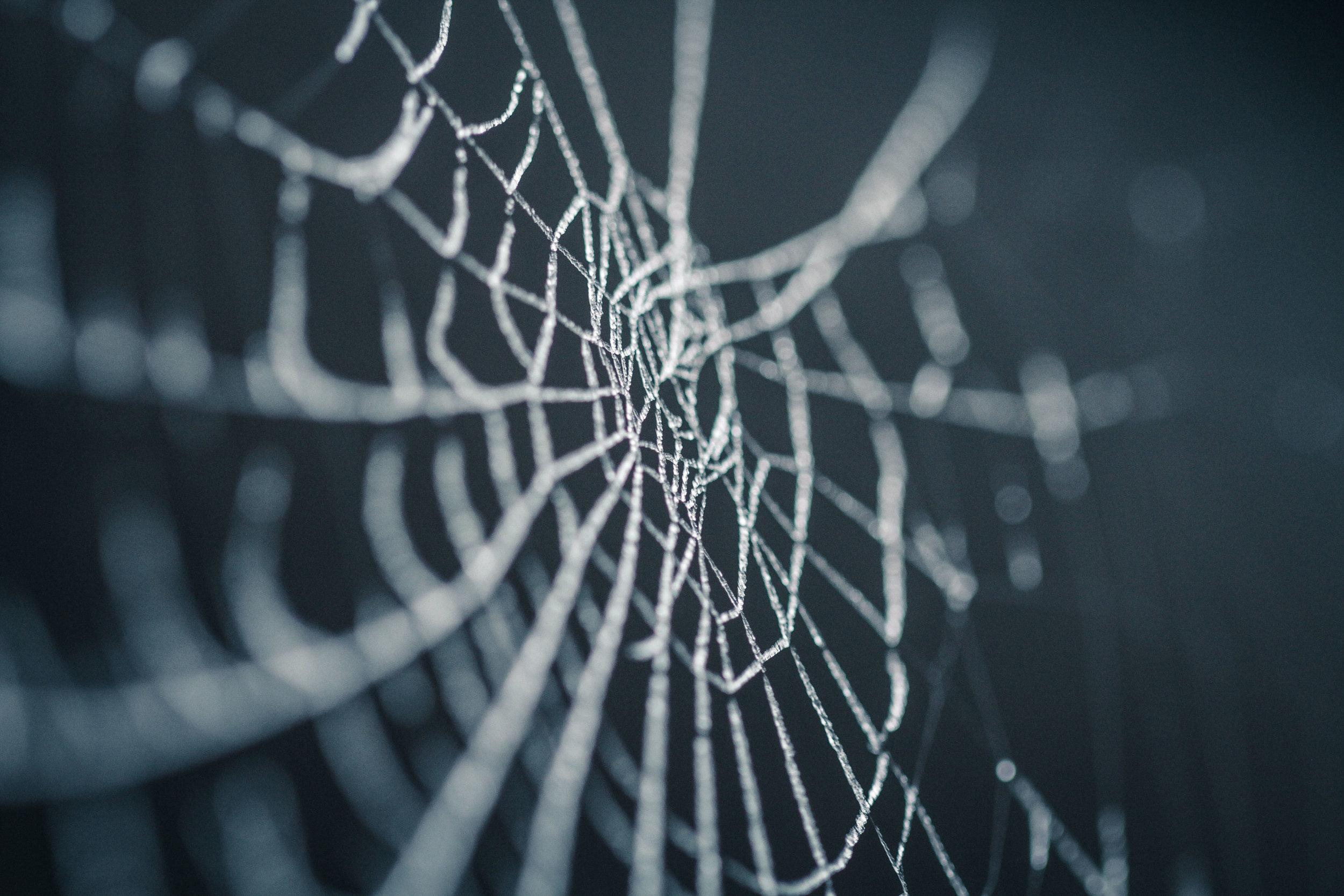 ¿Vive una araña en esta telaraña?