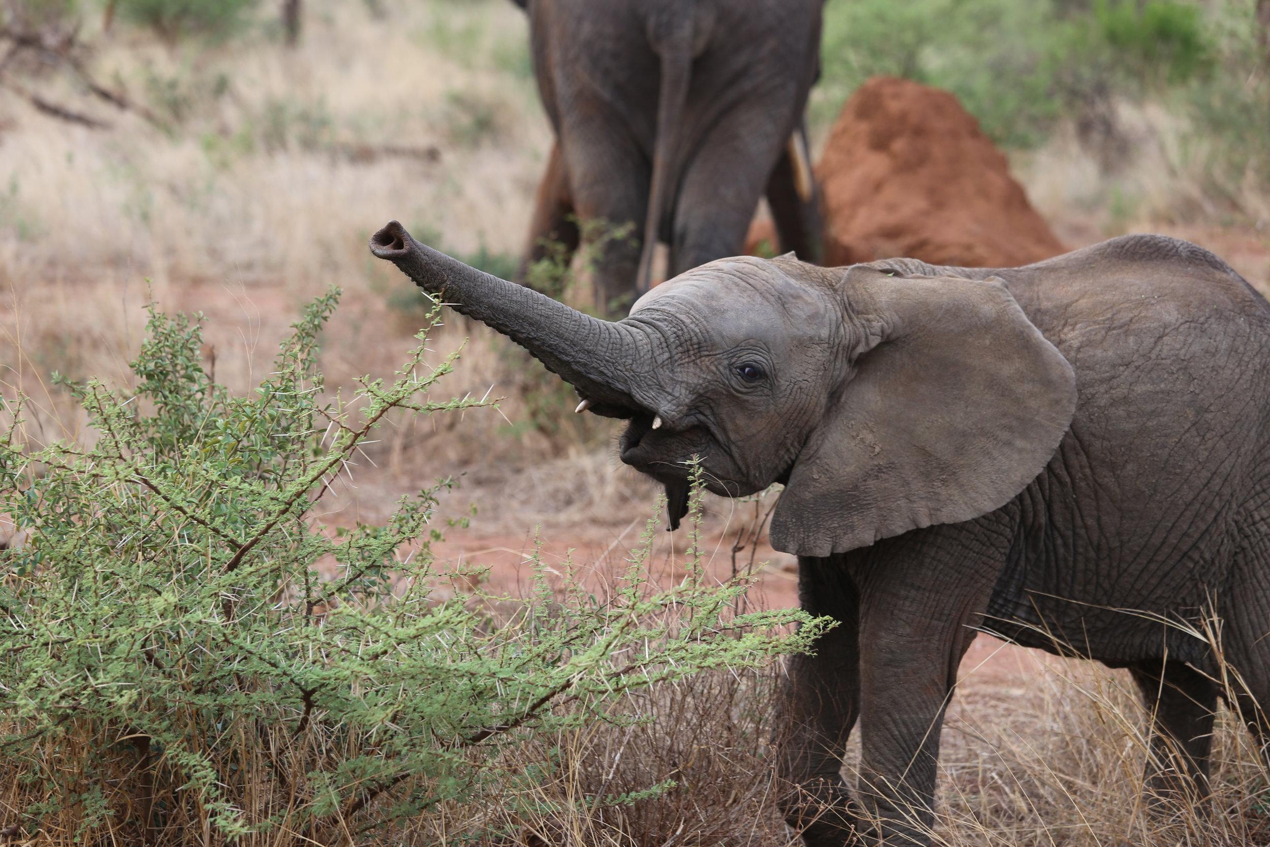 Quiero un elefante pequeño. Estoy muy triste porque no tengo un elefante pequeño.