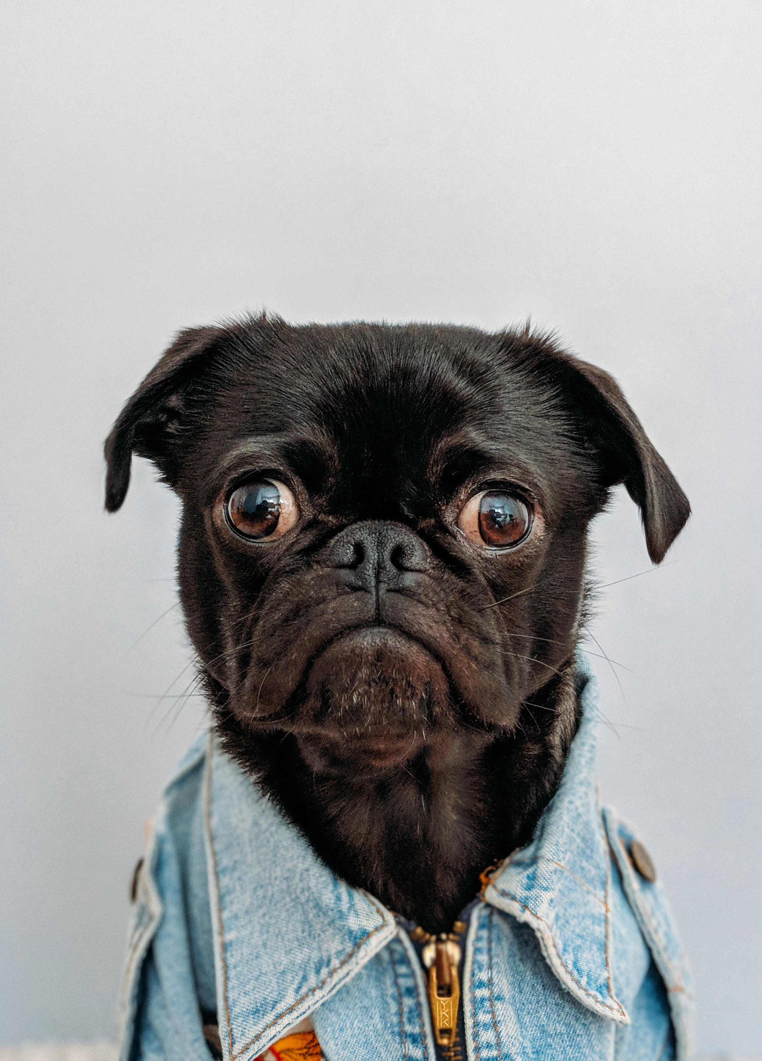 No puedo ir a clase. Mi perro está enfermo.