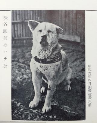 "Hachiko, image from the old magazine ""Shibuya Meibutsu"" 1934"