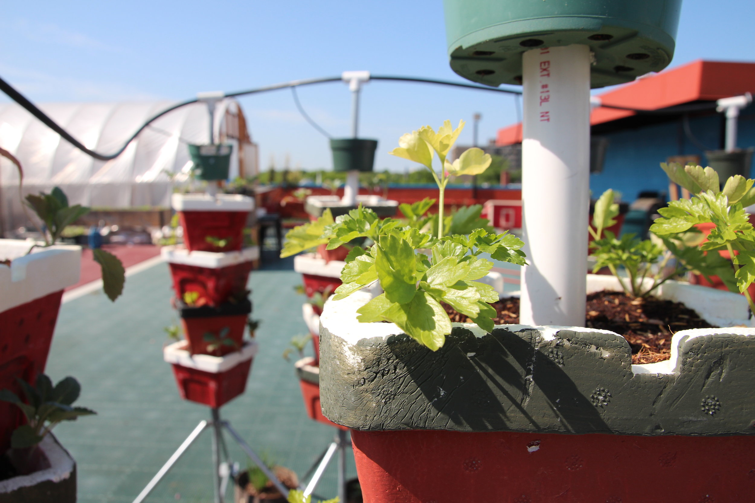 Vertical Growing with Soil  We grow vegetables and fruits, especially strawberries, in vertical towers designed to minimize pests and maximize space.   Learn More about our Veg Towers