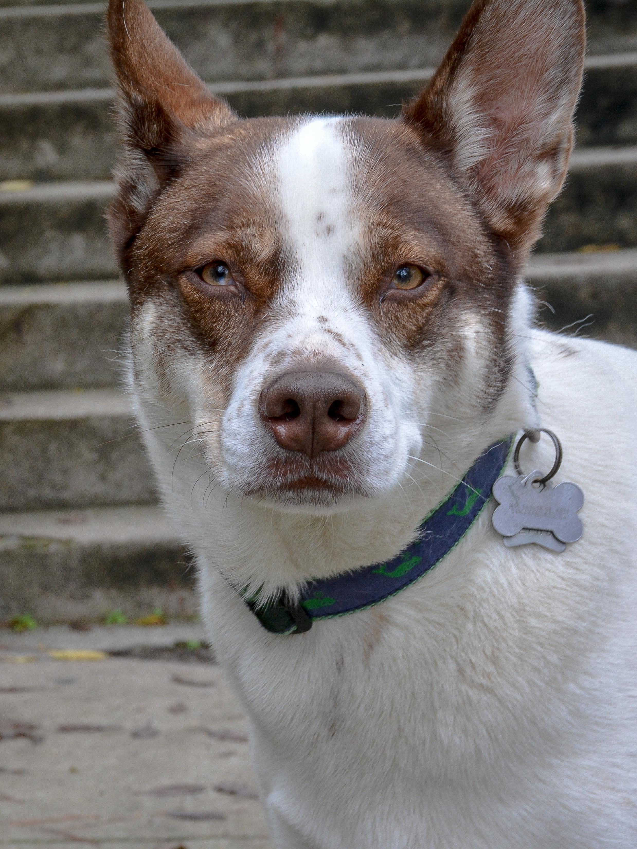 Dog Potrait.jpg
