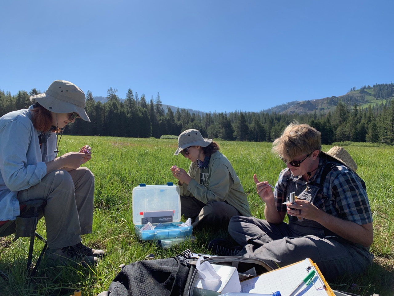 Isabelle, Sage, and Jake sampling flowers at our Norden CA field site
