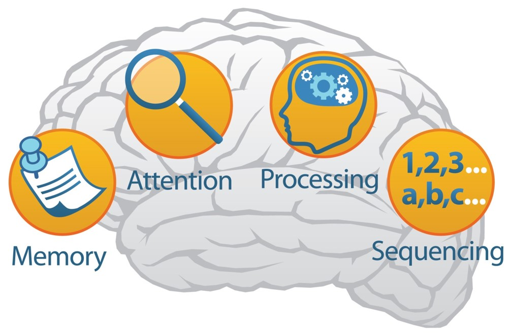 Brain - Memory, Attention, Processing, Sequencing