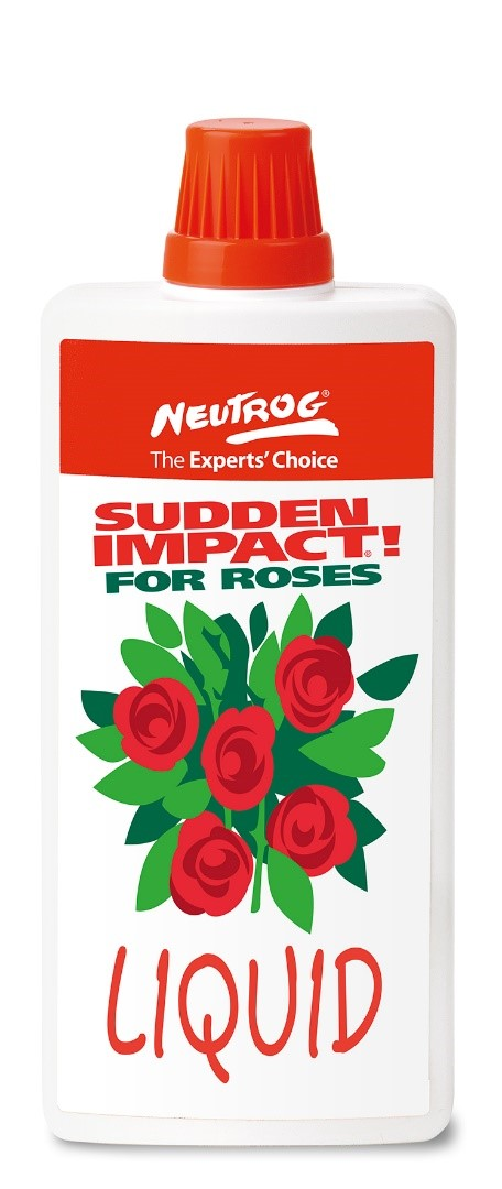 Sudden Impact For Roses.jpg