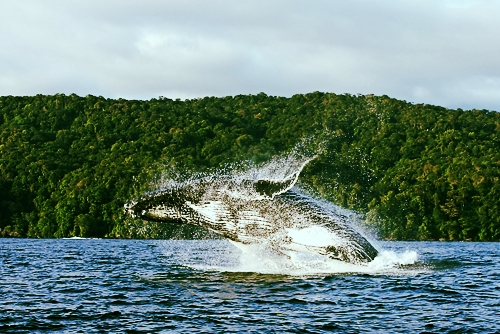 Utria Whale.jpg