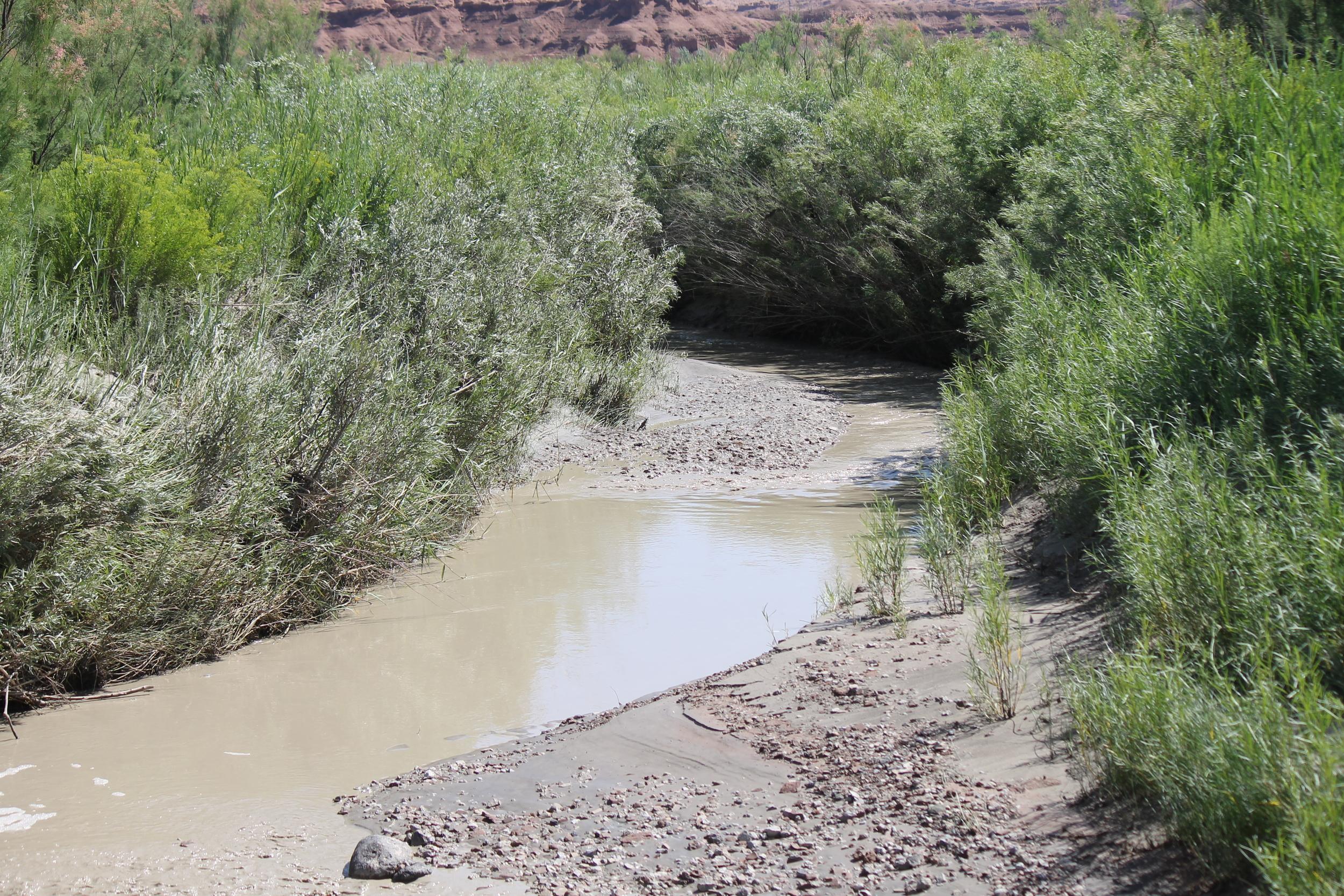 Muddy Creek from the Lone Tree Crossing bridge.