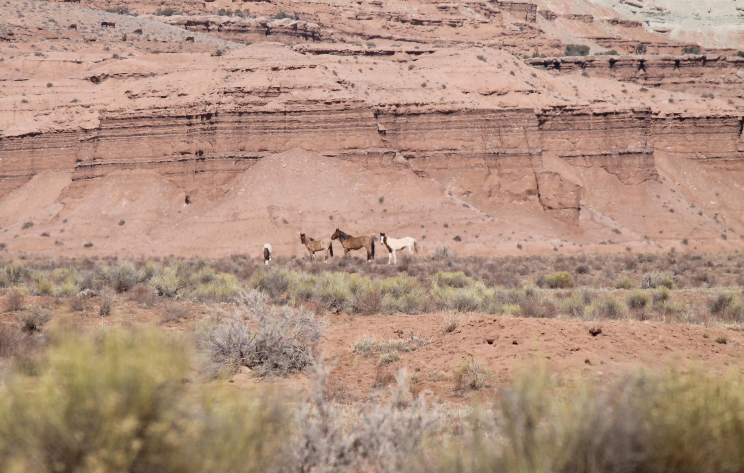 4 Near Muddy Creek South Salt Wash.jpg
