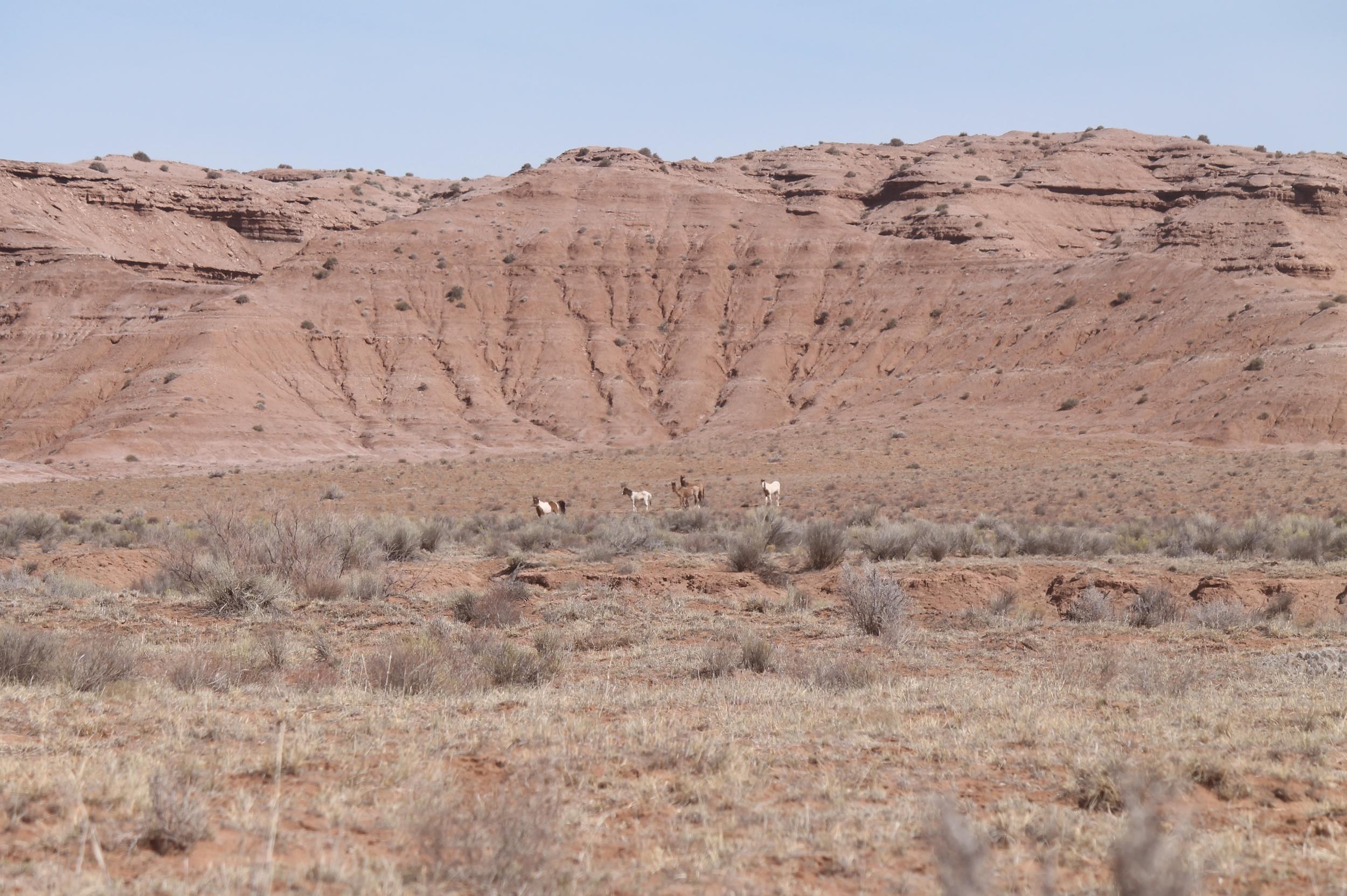 Band of 5 Near Muddy Creek South Salt Wash.jpg