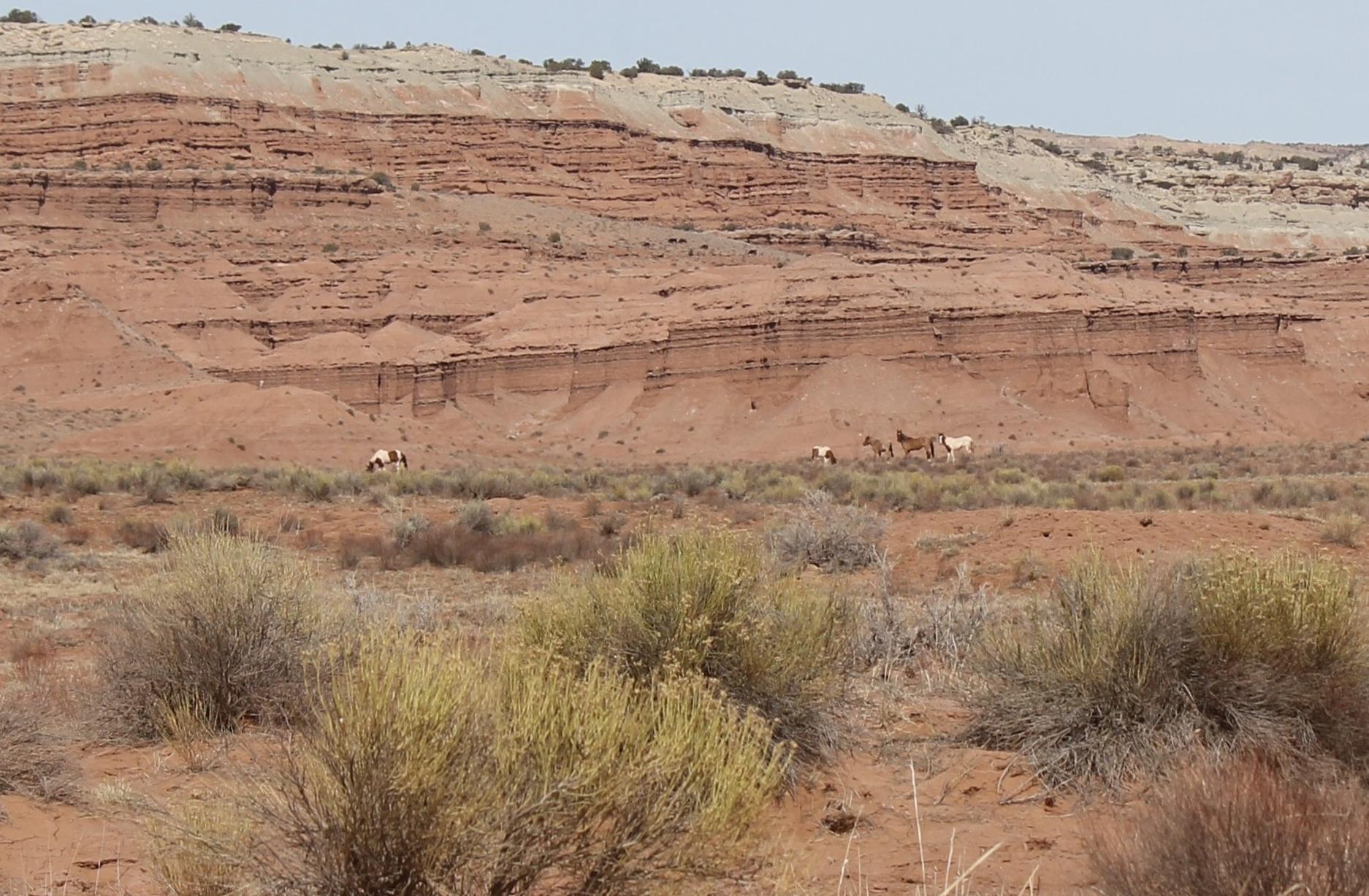 Band of 5 Near Muddy Creek South Salt Wash 2.jpg