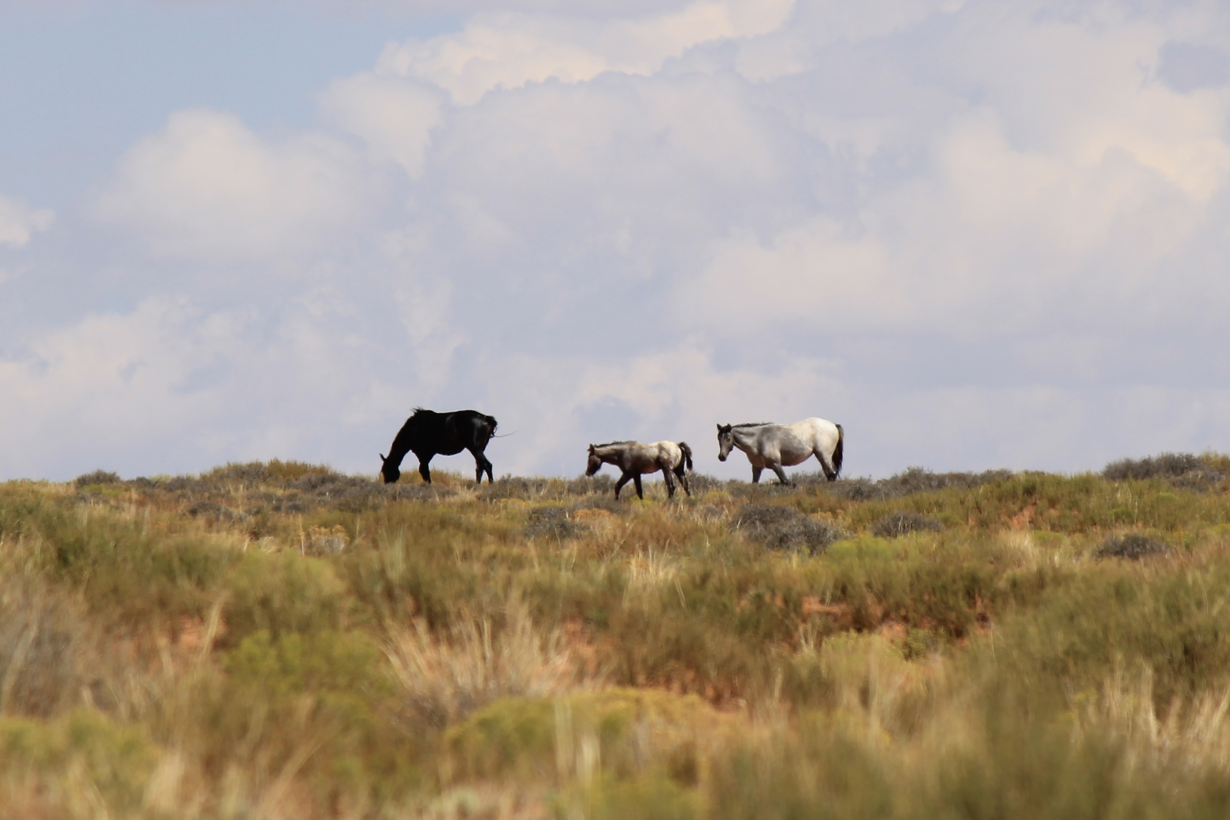 2 adults 1 foal Robber's Roost 2.jpg