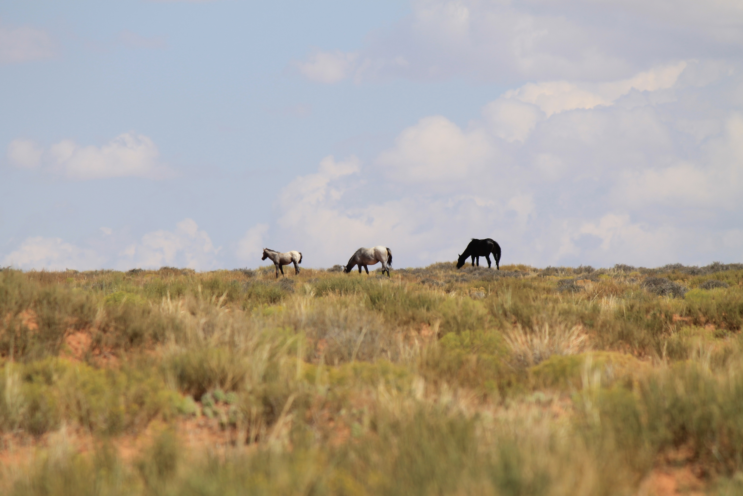2 adults 1 foal Robber's Roost 4.jpg