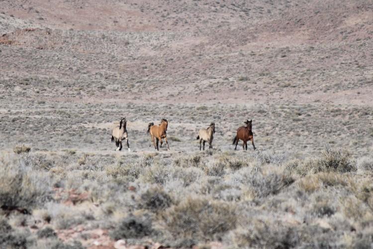 Four approaching near Pots-um-pa.