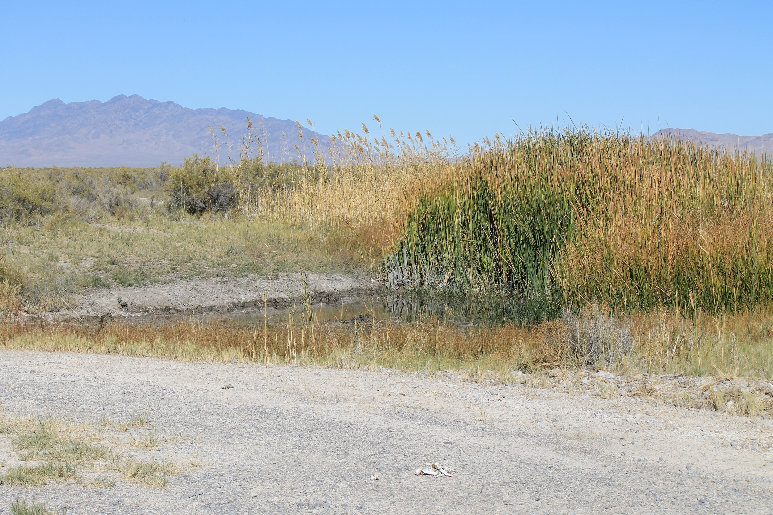 Coyote Spring marshes