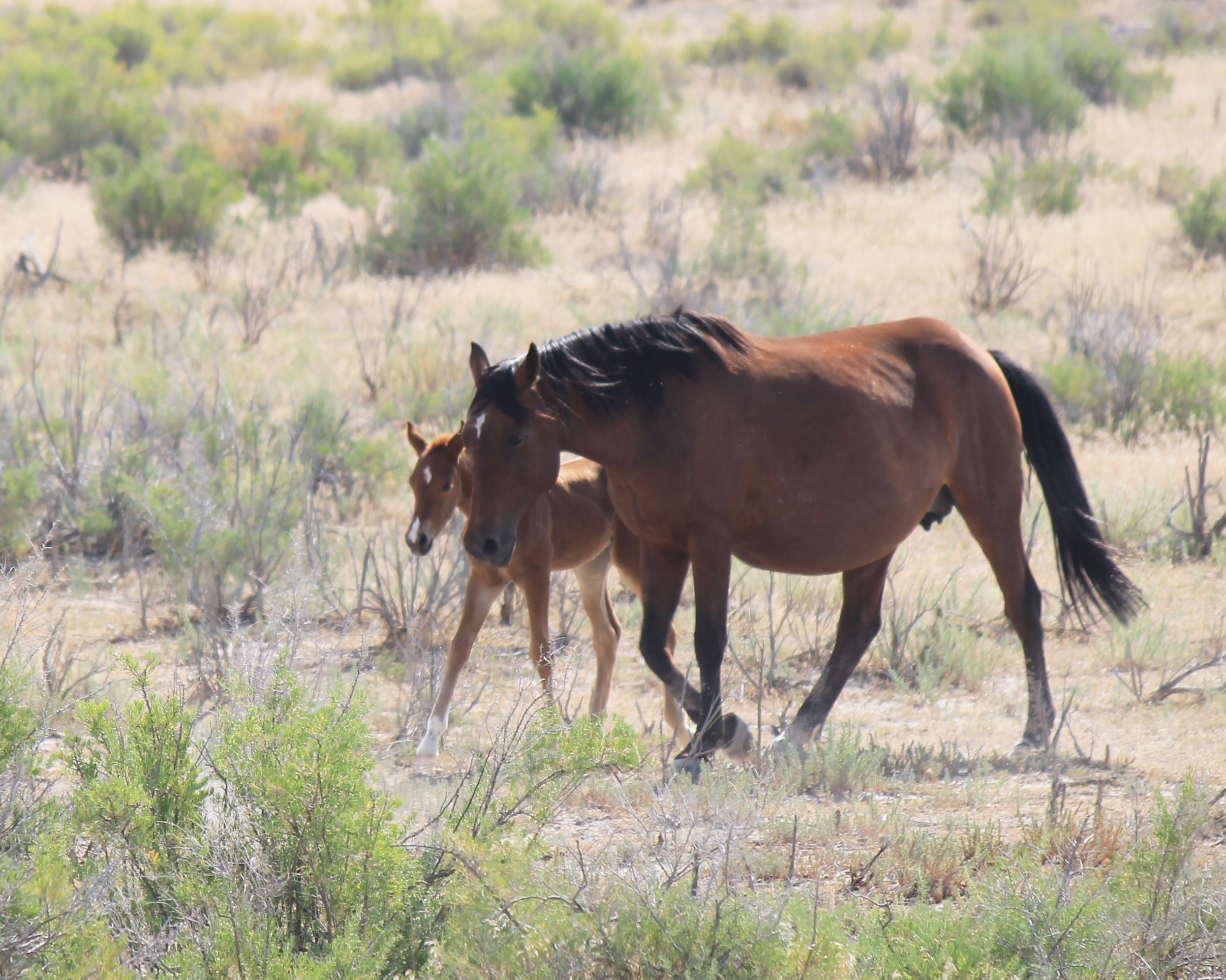 Handsome foal and his mama