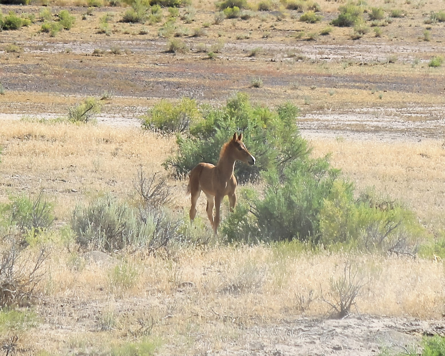 Handsome foal south of Ouray