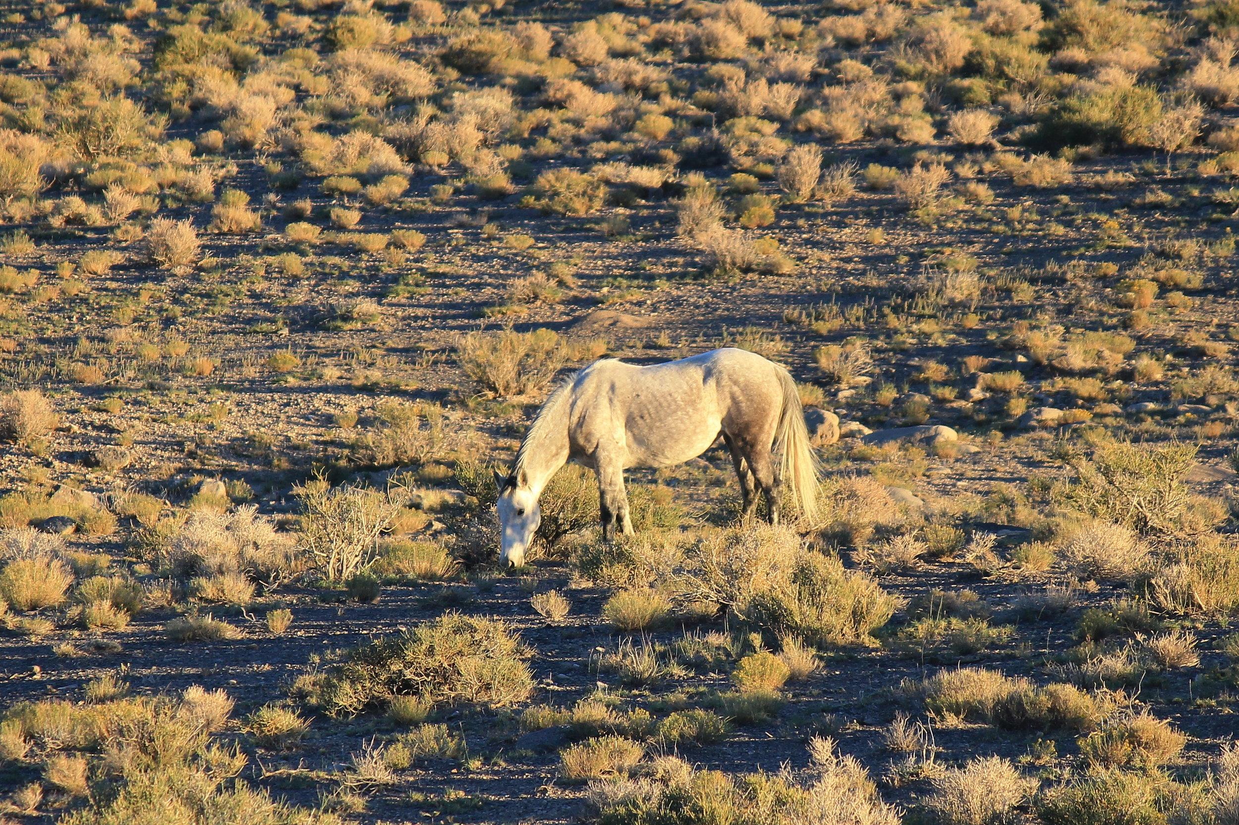 White Face near Antelope Spring.JPG