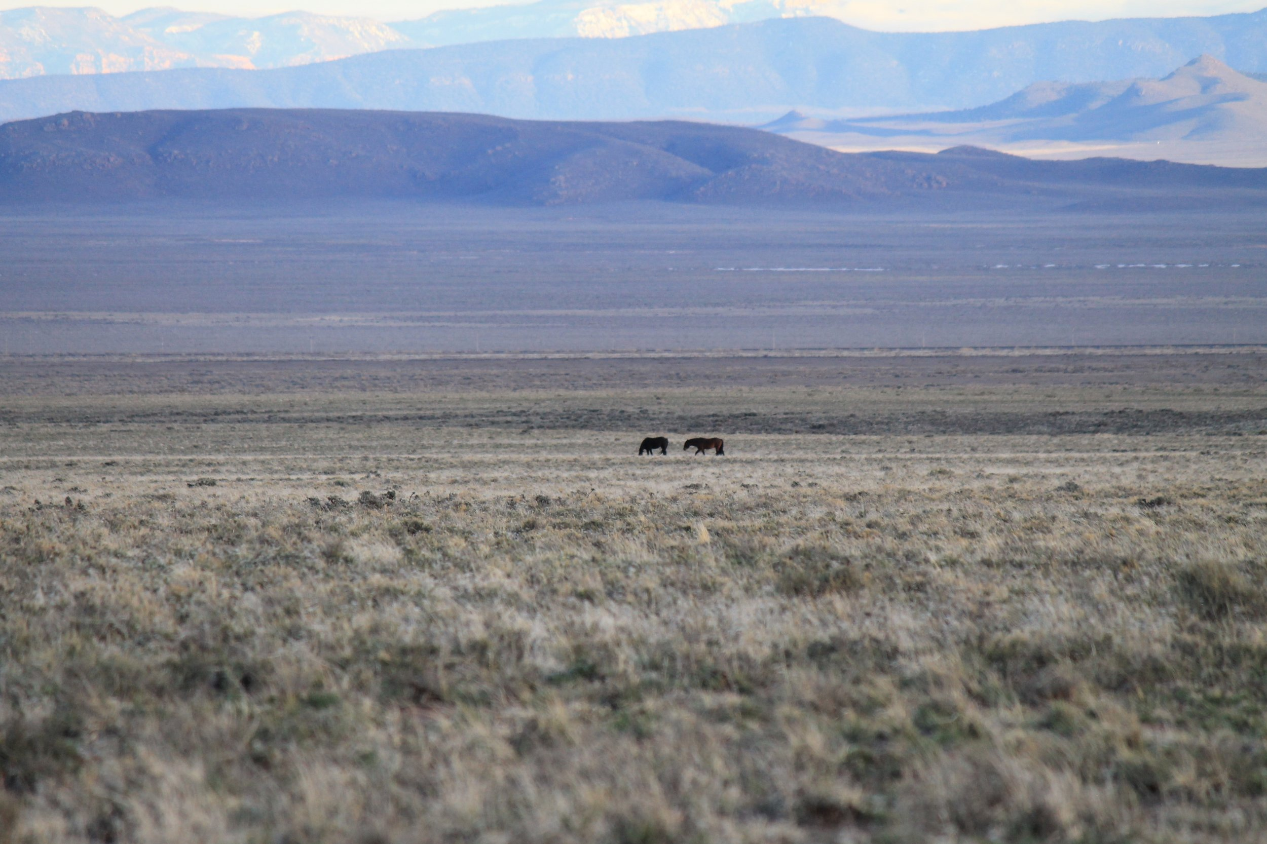 A pair in the Escalante Desert