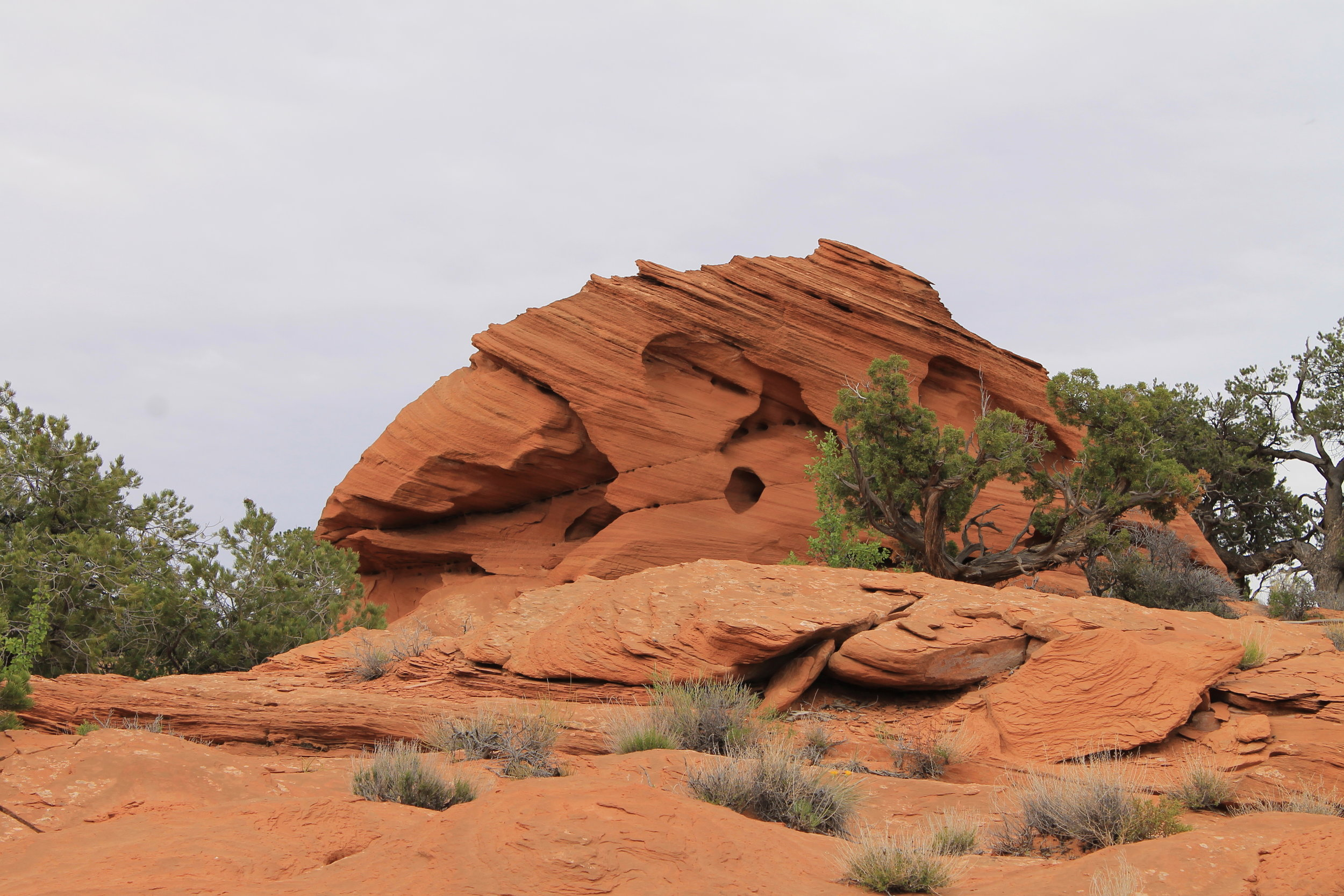 Parrot Skull Rock on Sam's Mesa Rd