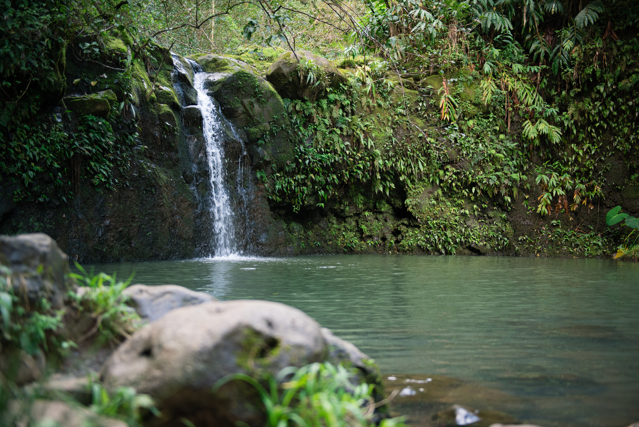 One of the many beautiful waterfalls just a short hike off the Road to Hana