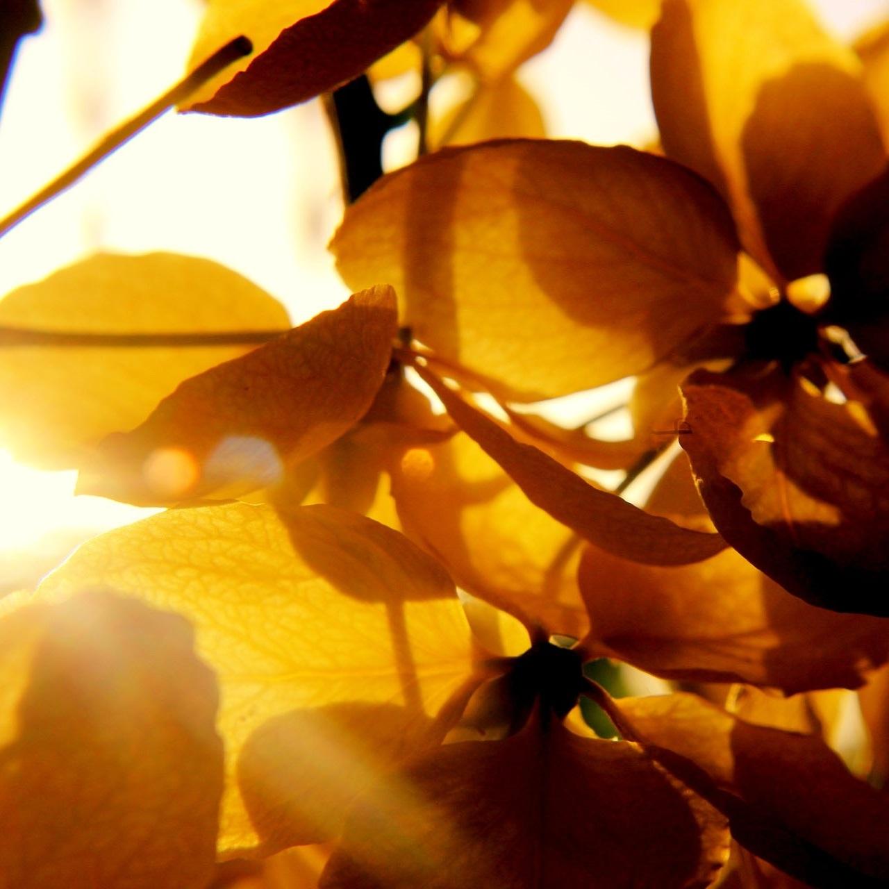 pexels-beautiful-bloom-blooming-640785.jpg