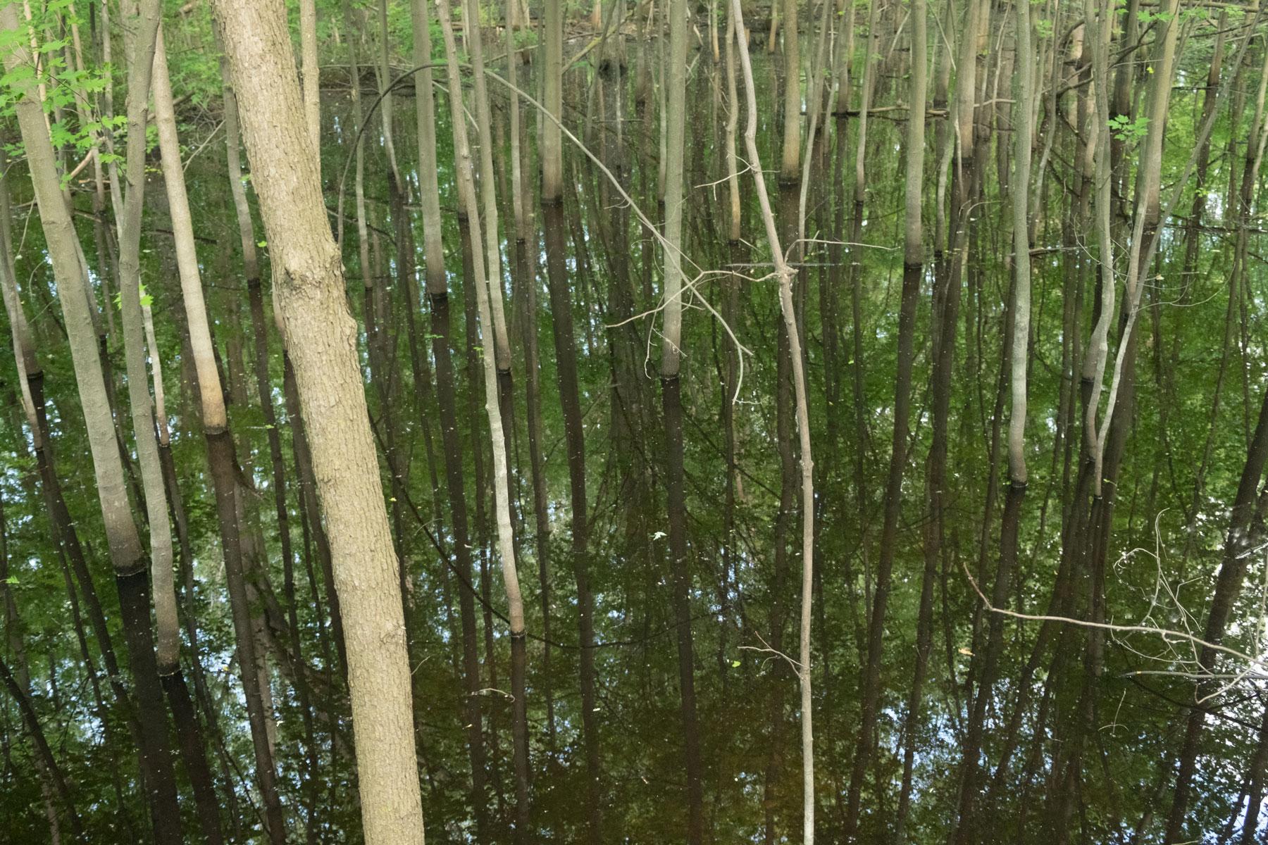 Les bayous de Cartierville. Les terres derrière l'Institut Albert-Prévost sont inondées à chaque printemps.