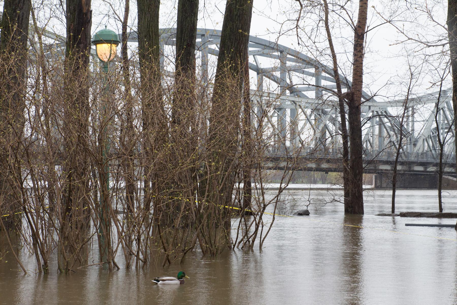 Le pont Lachapelle vu du parc Belmont un jour de crue printannière