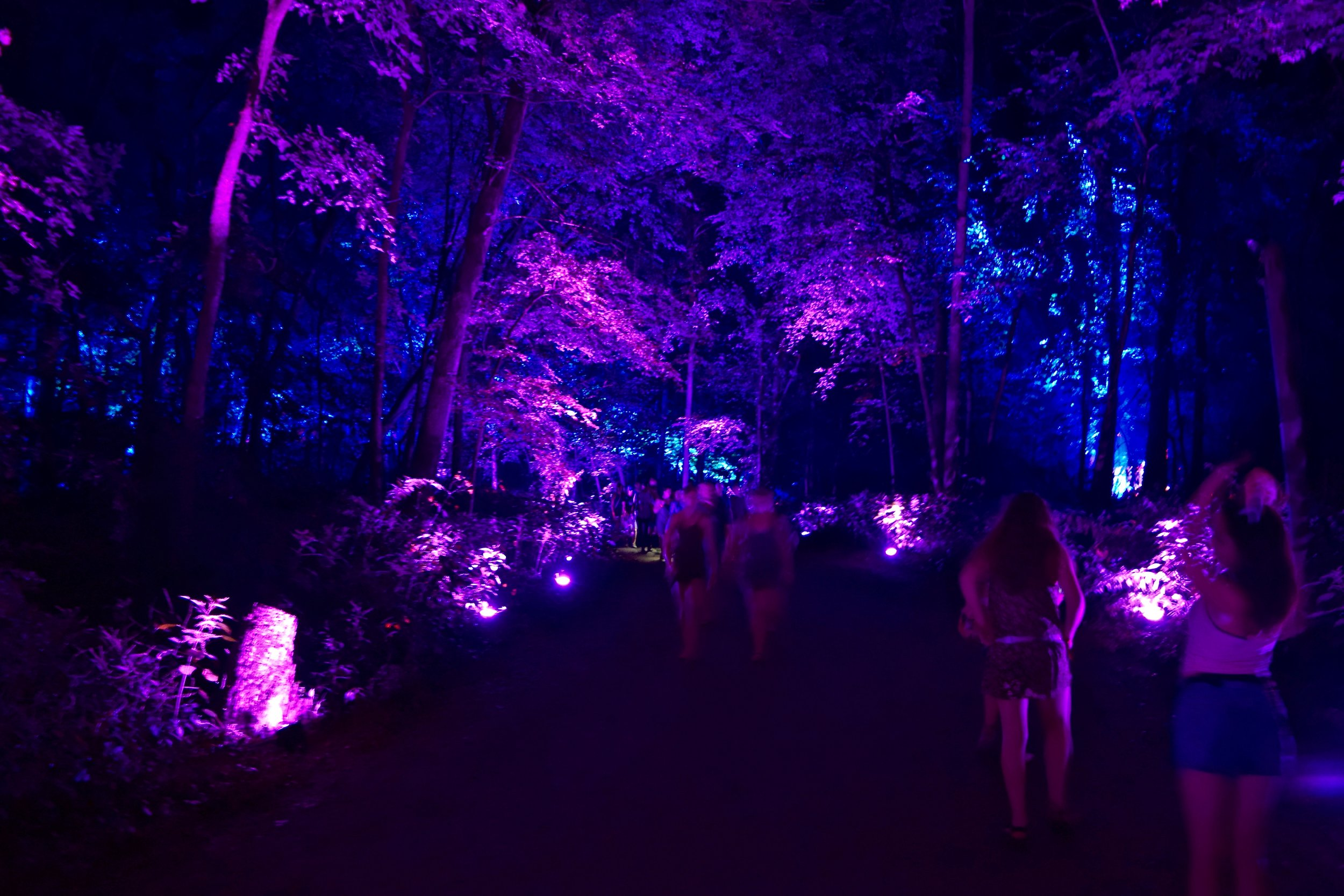 An enchanted forest lights up nightfall at Eaux Claires 2016, photograph by Anmol Gupta