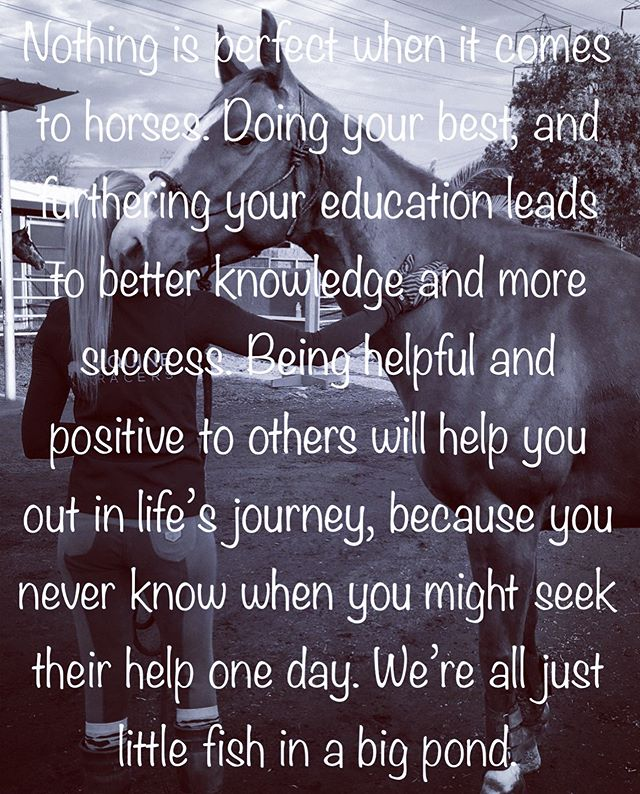 #inspiration #inspirationalpost #positivity #horses #positivemessage #equineracers #exracehorses