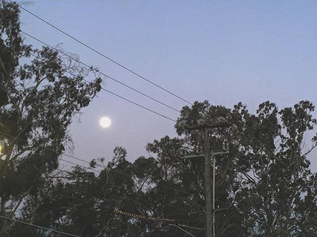 Sydney evenings, so balmy so fresh