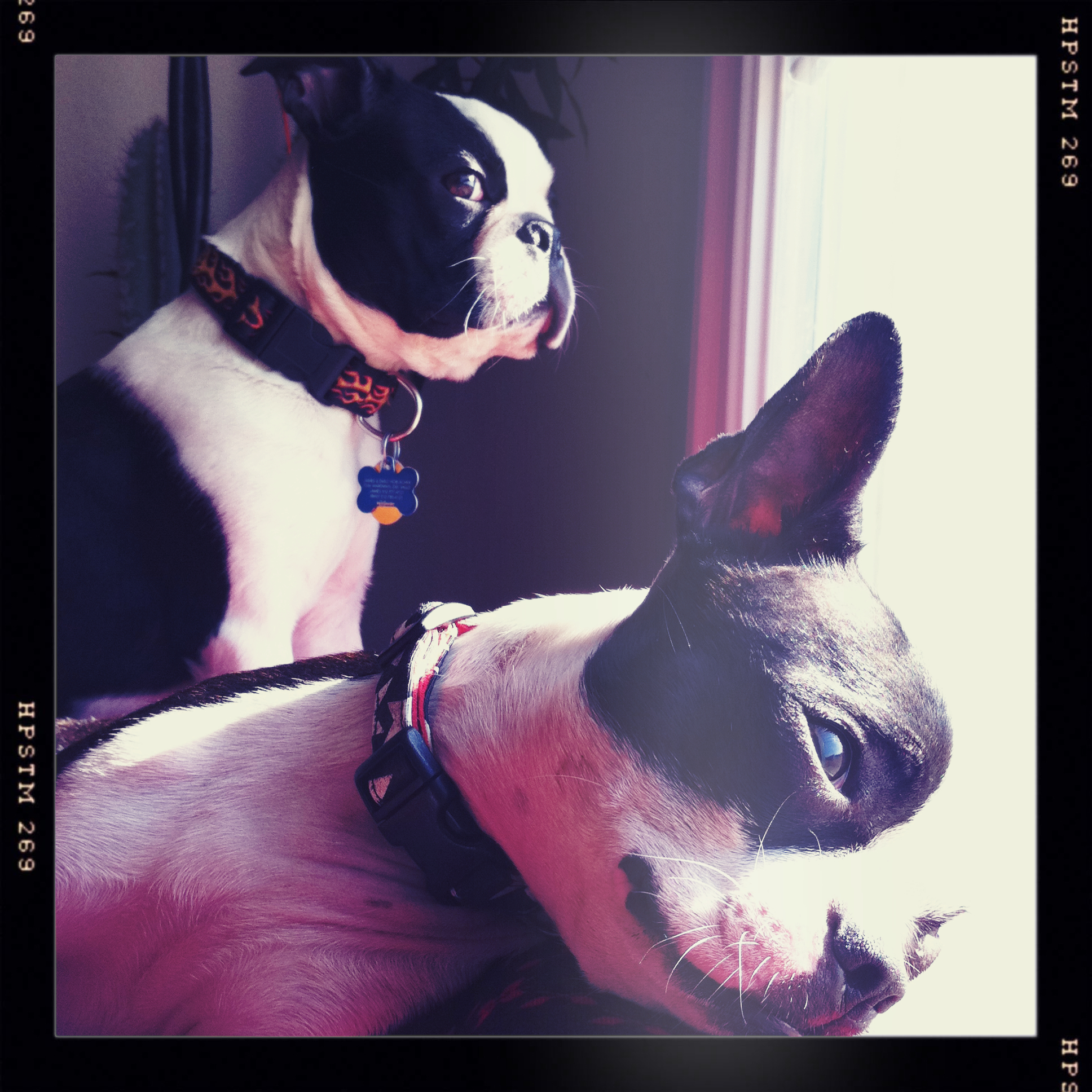 Obligatory photo of my nerds, Gus and Gilley.