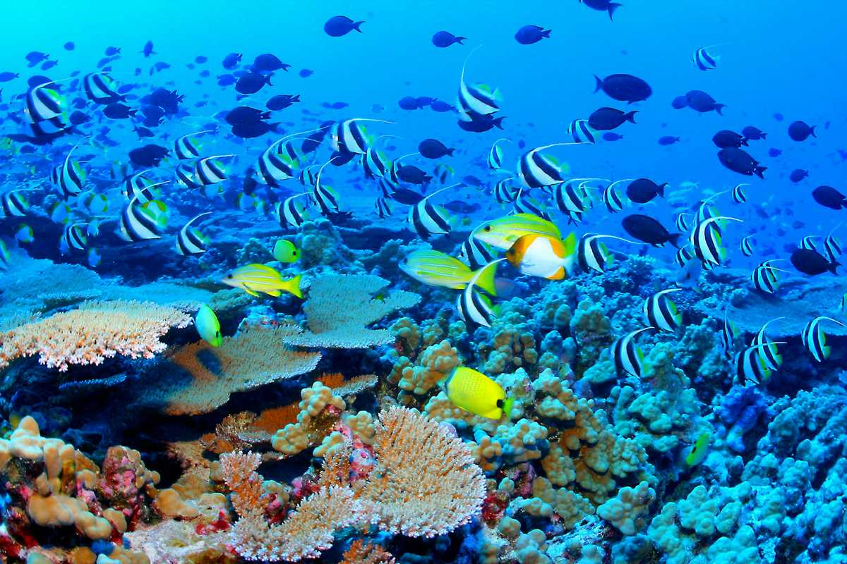 Great_Barrier_Reef_Biodiversity.jpg