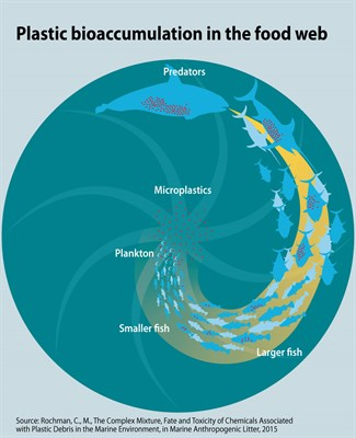 plastic-bioaccumulation-in-the-food-web_3ba9.jpg