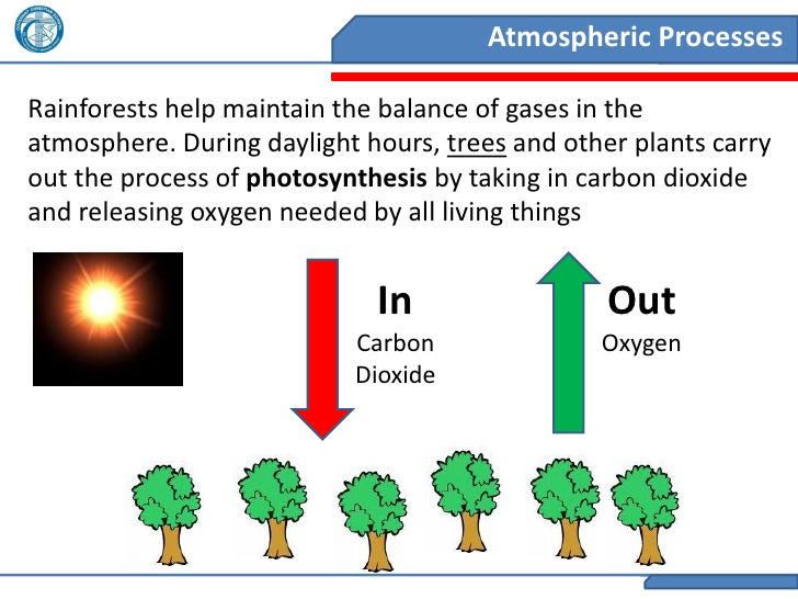 Source:https://www.slideshare.net/djgraygray/2011-year-8-geography-rainforests-geographic-processes