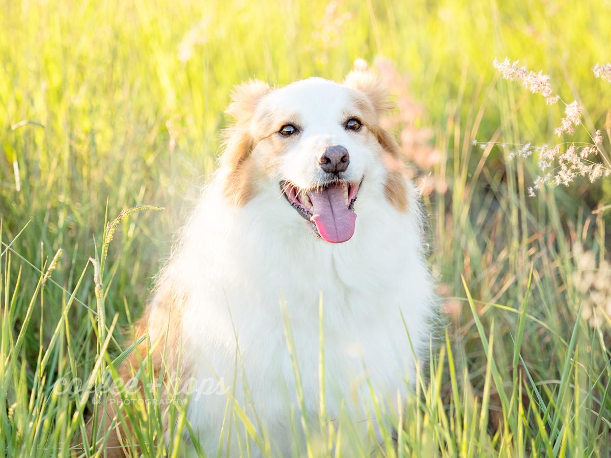 Baxter the border collie