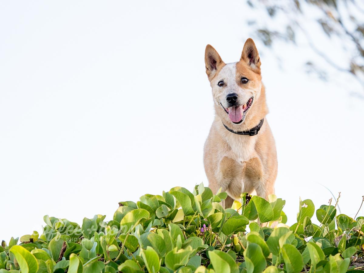 Toby, posing at East Point Beach, Mackay