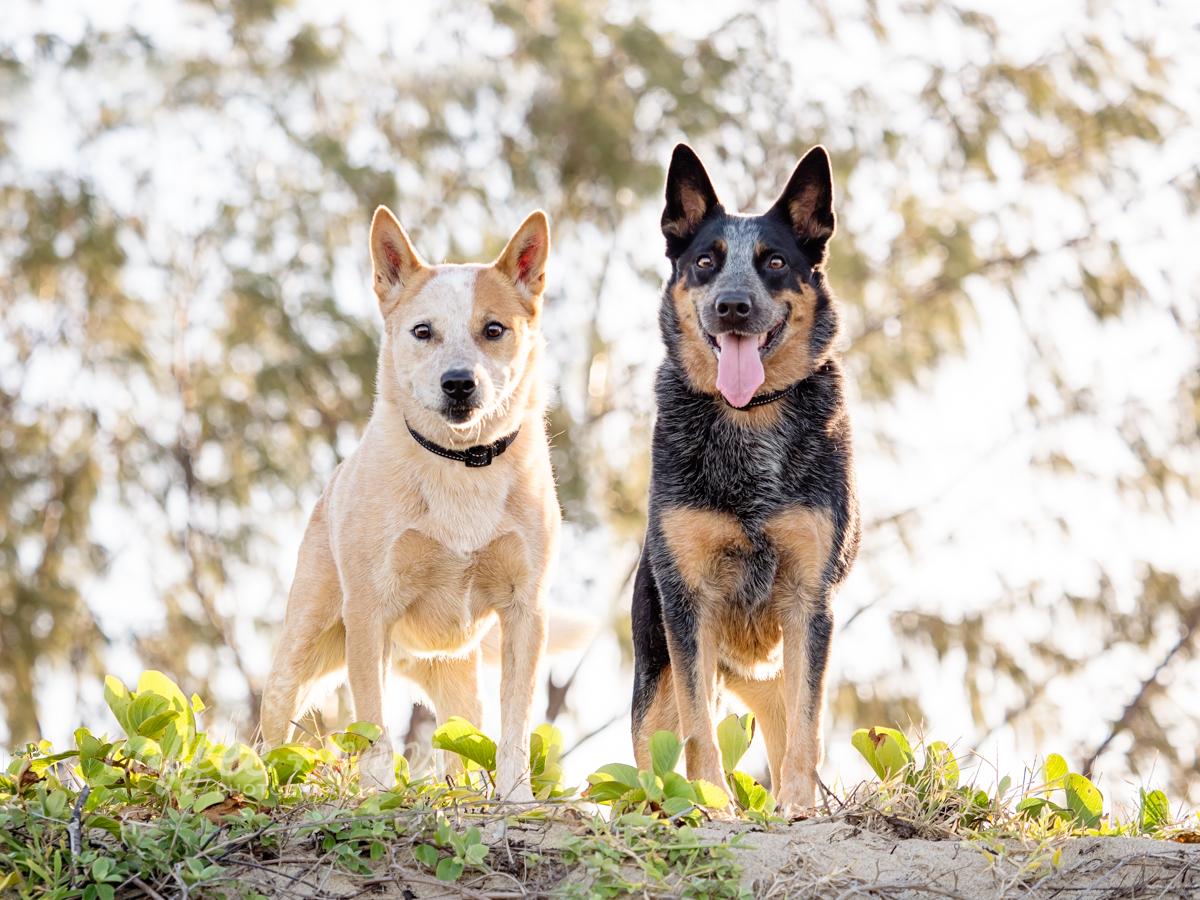 Toby & Kora