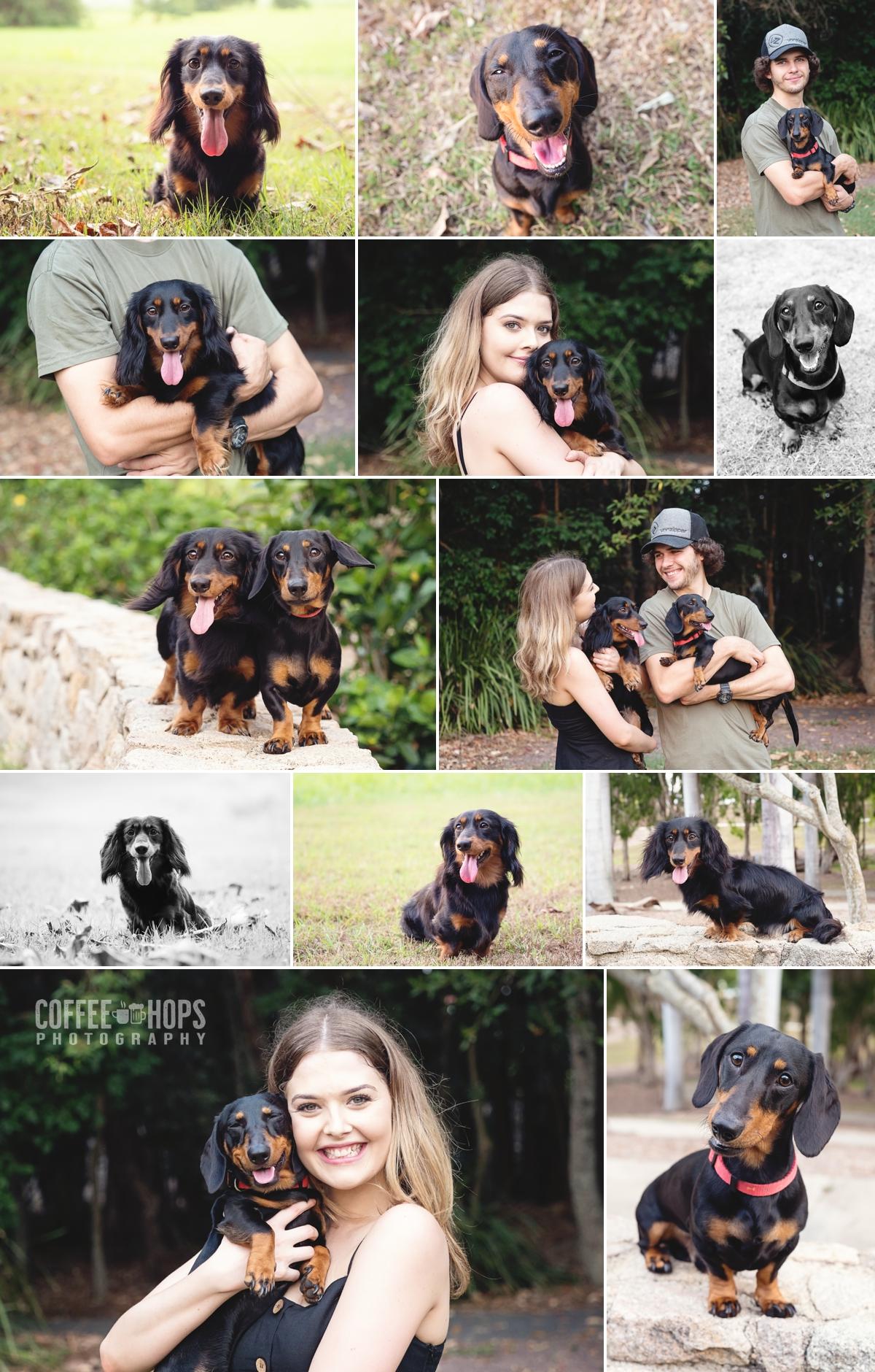 Pablo-Oatie-Dachshunds-pet-photography-session-at-mackay-botanic-gardens.jpg