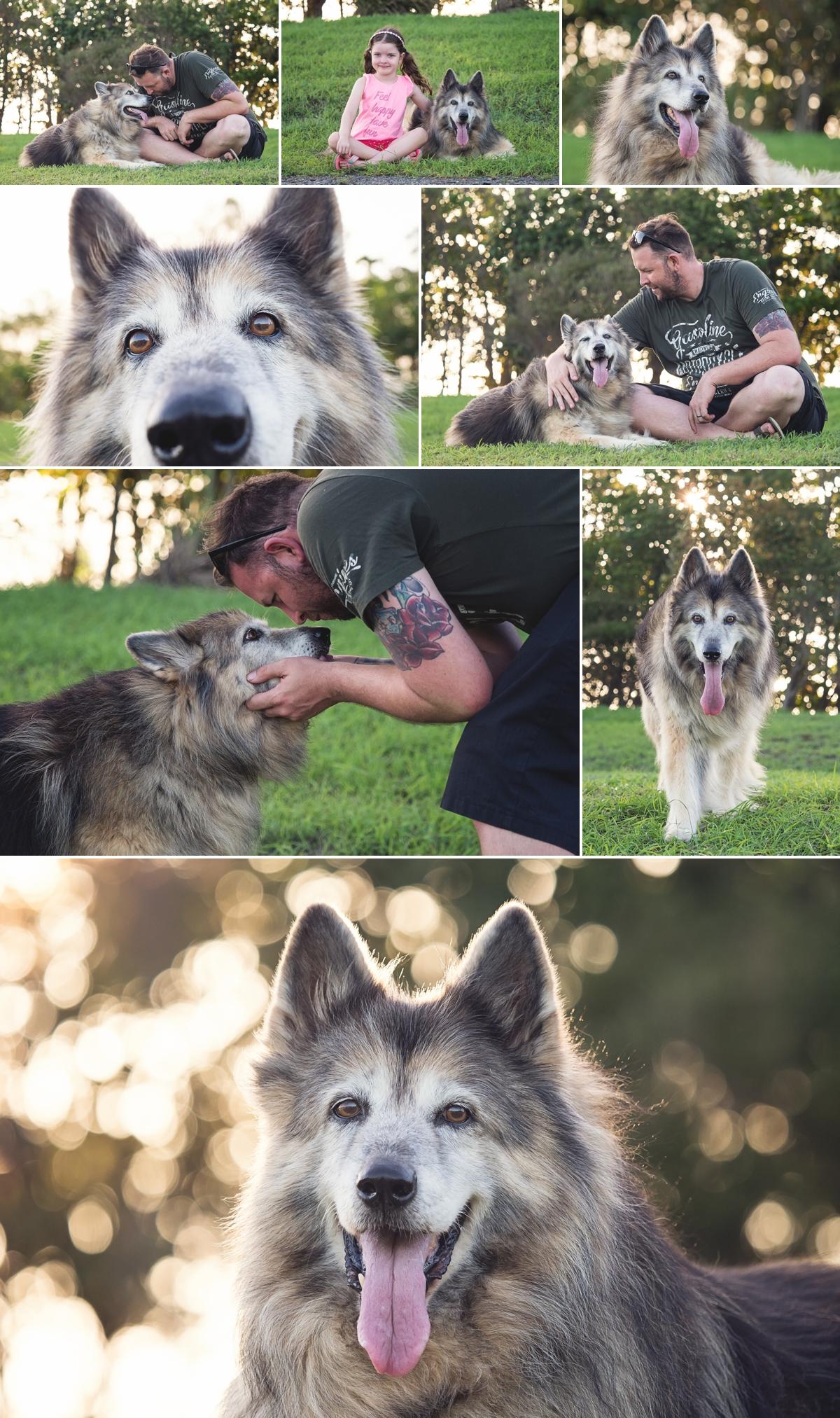 Micki-German-Shepherd-Husky-Pet-Session-Botanic-Gardens-Mackay.jpg