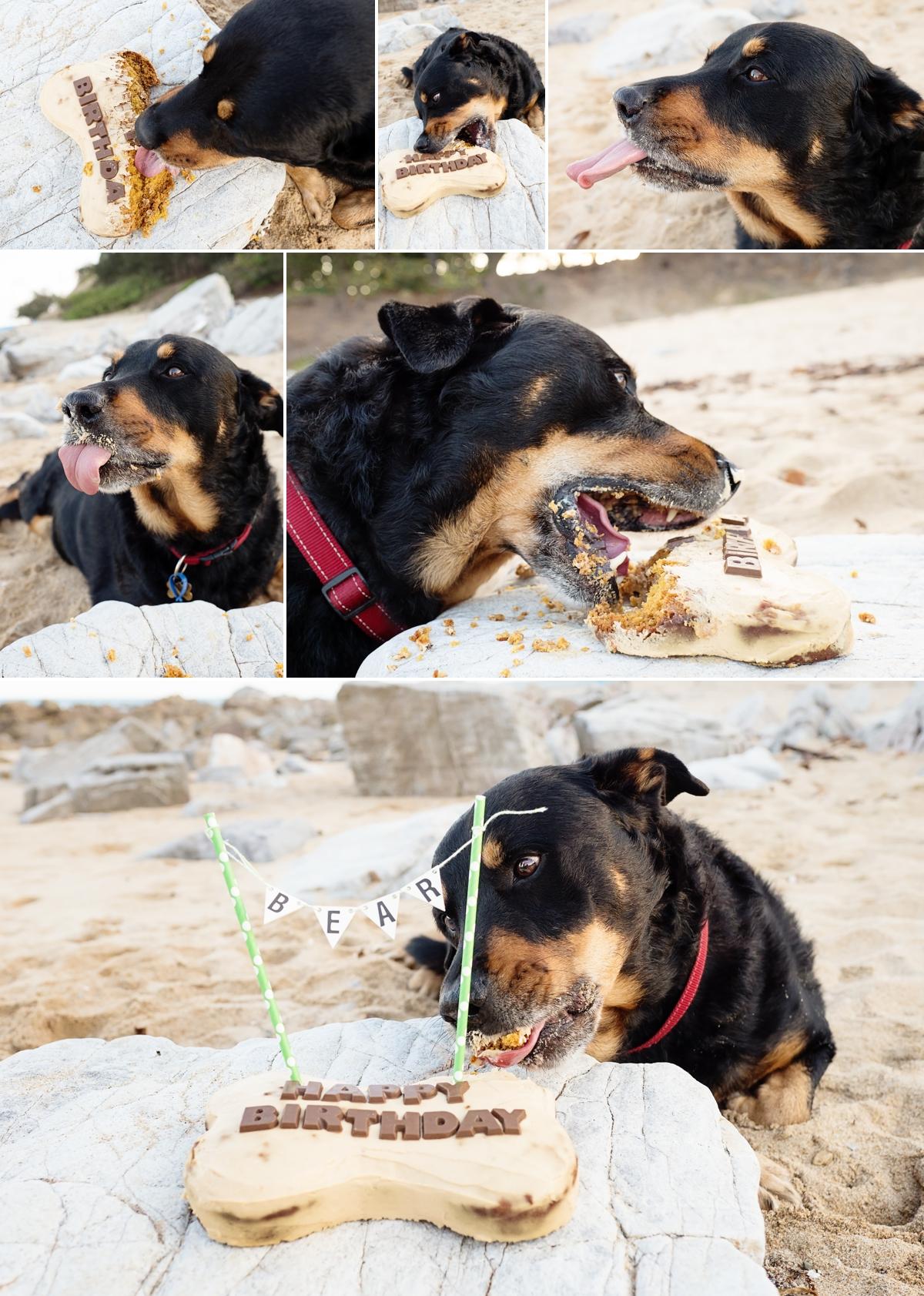 Bear-smashed-the-barking-mad-treats-cake.jpg