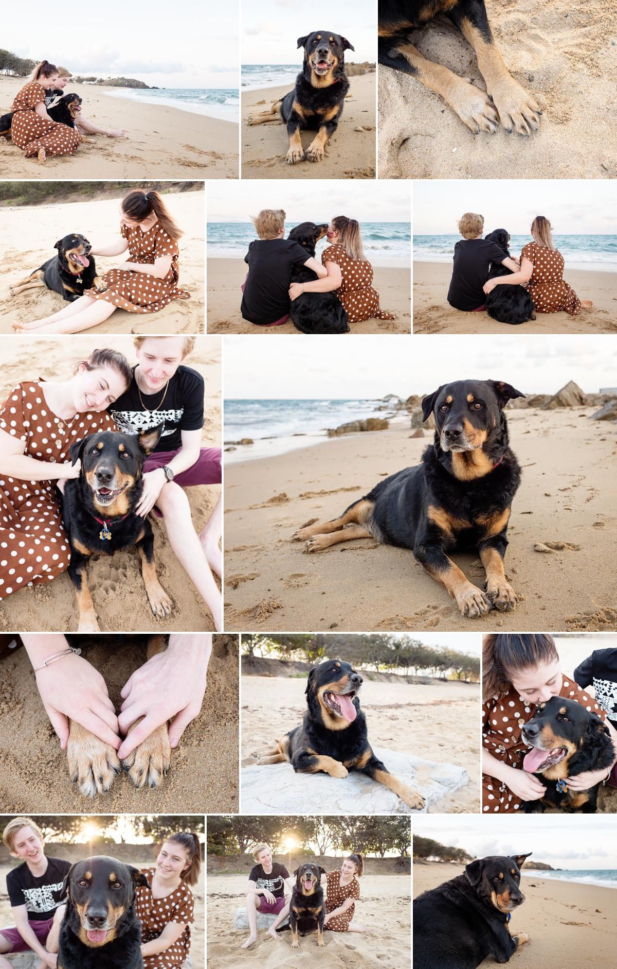 Bear-Dog-Session-Lamberts-Beach-Mackay.jpg