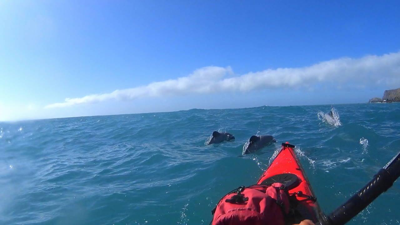 Dolphin near Le Bon